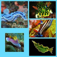 Sea slugs collage 9
