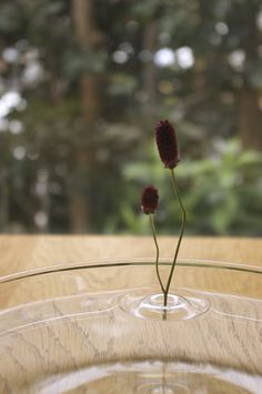 Japanese designer Taku Omura ofoodesign has created Ripple, a simple and stunning vase that overturns everything we ever knew about the art of flower arrangement. The piece, made from PET resin, supports a single flower and floats in water. Any vase, dish, glass, pond can be turned into a beautiful sight of drifting blooms. Designer explains: