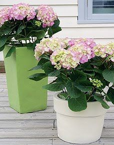 Pastel Planters  Sometimes it's hard to find garden pots in exactly the color you're looking for, and often those pots come with a hefty price tag. Fortunately, it's very simple to follow these quick decorating tips to make over your existing garden pots,