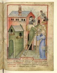 Nouvelle acquisition latine 1673, fol. 60, Récolte des oeufs de poule. Tacuinum sanitatis, Milano or Pavie (Italy), 1390-1400.