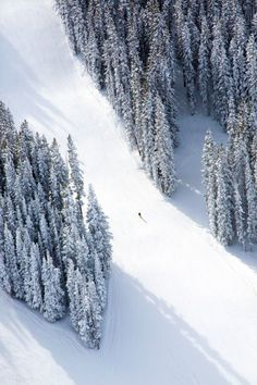 The best GM prints for anyone in your life - Aspen Lone Skier