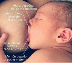 Pasitos de bebé: Agarre del pecho para una lactancia exitosa