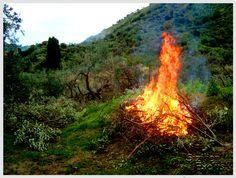 La Potatura – Nach der Olivenernte wartet noch viel Arbeit