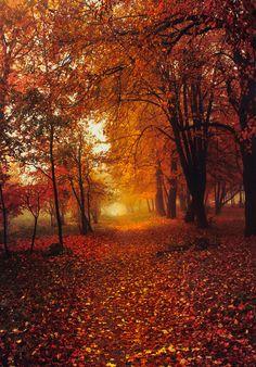 Autumn in Minnesota, Via Slava Samoilenko