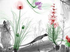 Imagen: Naturaleza transparente (© Arie Van't Riet)