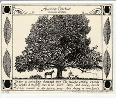 American Chestnut Tree and poem-This of blank, ivory notecards w envelopes features a drawing of an American Chestnut tree w poem American Chestnut, Technical Pen, Green Ribbon, Illustrations, Color Card, Will Smith, Note Cards, Poems, Ink