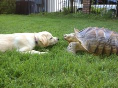 My dog (new) dog Lucy meeting my tortoise for the first time! https://i.redd.it/jc8v7cgzhot01.jpg