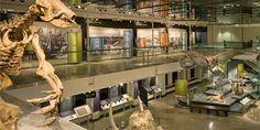 Natural History Museum of LA County   KBDA