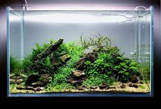 "769 Likes, 3 Comments - @ibrio.it on Instagram: ""www.ibrio.it your aquarium born here ! il tuo acquario nasce qui !…"""