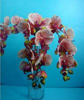 real touch,latex/silk moth orchids,