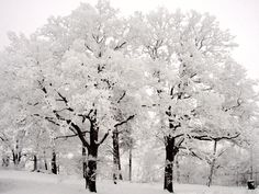 ...covered in snow