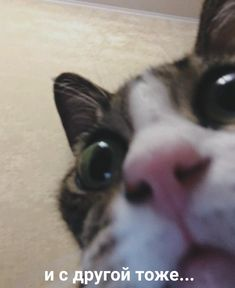 Got Memes, Stupid Memes, Funny Memes, Cute Animal Memes, Cute Animals, Reaction Pictures, Funny Pictures, Funny Note, Russian Memes