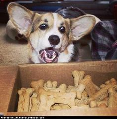 JACKPOT!  Dog Cookies • APlaceToLoveDogs.com • dog dogs puppy puppies cute doggy doggies adorable funny fun silly photography