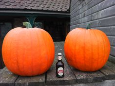 A bottle of ginger beer sat between two massive orange prize winning #pumpkins on display at a farm shop in North Yorkshire ready for #Halloween #Autumn
