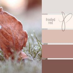 Frosted Red - via color your world