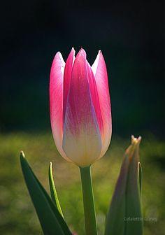 Pink and Light - Işık ve Pembe