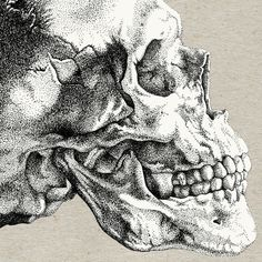 skull pointillism - Buscar con Google