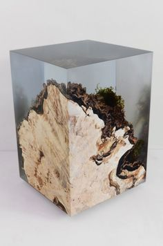 Tree stump set into resin preserves all the surface moss and other details.: