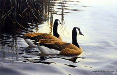 Artist Derk Hansen Unframed Canadian Geese Print End Of The Journey | WildlifePrints.com