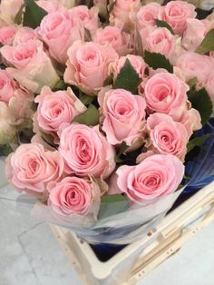 Exclusively in the OZ Export webshop Specials: Rosa gr. Babyface, 40/50 cm, x 60/80 st. by Zuurbier&Co