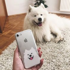 Samoyed Page ( samoyedpage ) - Matchy-matchy 🐻 Phone case from Fluffy Dog Breeds, Big Fluffy Dogs, Cute Dogs Breeds, Puppy Breeds, Samoyed Dogs, Havanese Puppies, Small Puppies, Cute Dogs And Puppies, Doggies