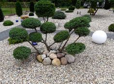 Appear this essential image in order to look into the provided information on Backyard Pool Ideas Landscaping Garden Yard Ideas, Japan Garden, Acreage Landscaping, Backyard Landscaping, Rock Garden Design, Japanese Garden, Outdoor Gardens, Garden Borders, Mulch Landscaping