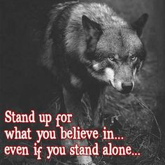 From today forward i will not allow ppl to take advantage of . From today forward i will not allow ppl to take advantage of my kindness Wisdom Quotes, True Quotes, Quotes To Live By, Motivational Quotes, Inspirational Quotes, Wolf Qoutes, Lone Wolf Quotes, Of Wolf And Man, Warrior Quotes