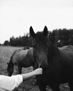 Hello Friday, Friday Weekend, Art Daily, Vintage Vibes, Horse Photography, Minimalism, My Photos, Wildlife, Horses