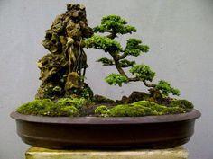 via fb page Bonsai Duy tran