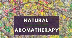 Aromatherapy and Nature - power of aromas nature has gifted us with.