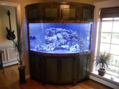 built in saltwater tank 235 Gallon Corner Bow-Front Build - Reef Central Online Community Fish Tank For Sale, Cool Fish Tanks, Tropical Fish Tanks, Saltwater Tank, Saltwater Aquarium, Aquarium Fish Tank, Corner Aquarium, Aquarium Pictures, Build A Fireplace