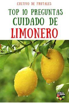 Necesitás saber cómo cultivar un limonero? Qué te parecería aprender a tratar los problemas más comunes que te van a surgir durante el camino? Sigue leyendo para conocer los 10 temas más importantes sobre el cuidado de los limoneros #Plantas #Limonero #Jardín #Jardinería #Cultivar