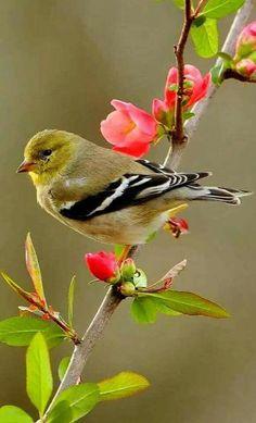 10 Beautiful plants to attract wild birds to your garden Cute Birds, Pretty Birds, Beautiful Birds, Animals Beautiful, Cute Animals, Exotic Birds, Colorful Birds, Goldfinch, Backyard Birds