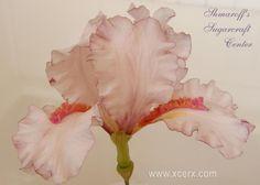 Pink Dutch Iris - Cake by Petya Shmarova