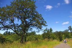 Cooper Mountain Loop Hike - Hiking in Portland, Oregon and Washington