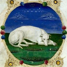Me thinks this is a greyhound. Taddeo Crivelli, white sleeping dog from the Bible of Borso d'Este, 1455 Medieval Life, Medieval Art, Medieval Manuscript, Illuminated Manuscript, Renaissance, Greyhound Art, Book Of Hours, Sleeping Dogs, White Dogs