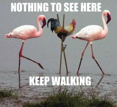 NOTHING TO SEE HERE KEEP WALKING