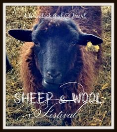 "I added "" Rhinebeck (NY) Sheep & Wool Festival"" to an #inlinkz linkup!http://dpetrillo.blogspot.com/2014/10/rhinebeck-ny-sheep-and-wool-festival.html"
