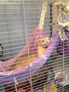 Ferret Lost in Hillsborough, Sheffield, Animal Adoption, Pet Adoption, Patron Saint Of Animals, Francis Of Assisi, Long Brown Hair, Animal Control, Find Pets, Lost & Found, Ferret