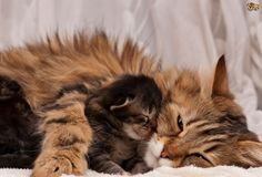 Cat Love With His Baby
