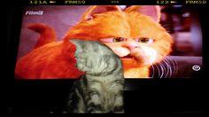 watching Garfield