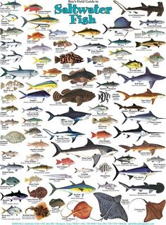 Deep Sea Fishing, Gone Fishing, Best Fishing, Fishing Tips, Fishing Tackle, Salt Water Fish, Salt And Water, Fishing Knots, Fishing Lures