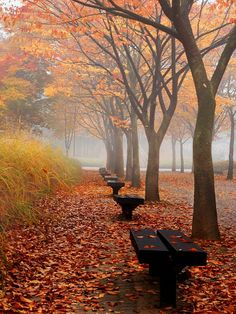 Fall. Autumn . Red . Orange . Yellow . Brown . Trees . Leaves . Benches. Street . Still life . Landscape
