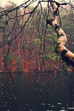Nature is amazing! and God is under the amazing nature! Fall Inspiration, I Love Rain, Autumn Rain, Autumn Cozy, Winter Rain, Belleza Natural, Fauna, Pics Art, Rainy Days