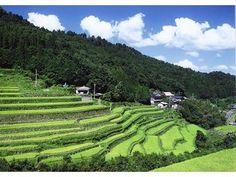 両合棚田 innai #japan #oita #usa Rice Paddy, Oita, Wabi Sabi, Fields, Terrace, Golf Courses, Beautiful Pictures, Around The Worlds, Japanese
