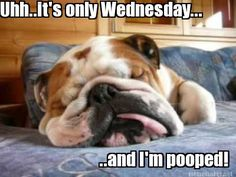 Meme Maker - Uhh..it's only Wednesday... ..and I'm pooped!