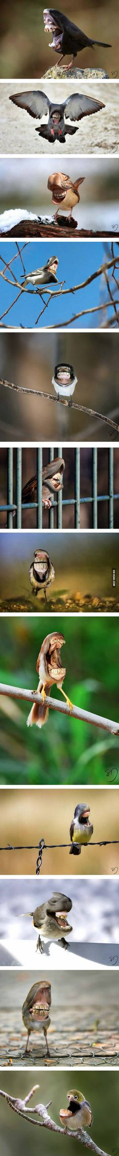 Big Mouth Birds: My Newest Series Of Hybrid Animals - 9GAG