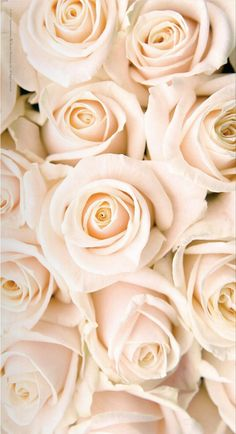 Flowers wallpaper for phone iphone backgrounds pink roses super ideas White Roses Wallpaper, Ps Wallpaper, Trendy Wallpaper, Tumblr Wallpaper, Flower Wallpaper, White Roses Background, Cream Wallpaper, Wallpapers Rosa, Iphone Wallpapers