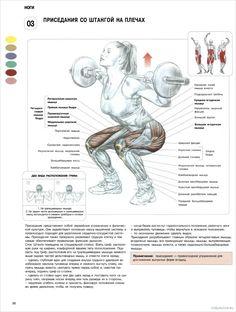 Ноги - ПРИСЕДАНИЯ СО ШТАНГОЙ НА ПЛЕЧАХ Wellness Fitness, Health Fitness, Social Well Being, Gym Tips, Sports Training, Regular Exercise, Super Powers, Weight Lifting, Gym Workouts