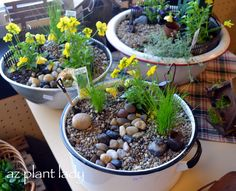 How to Make a Fairy Garden Container-birdsandbloomsblog.com